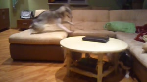 سرگرمی جالب توله سگ ها