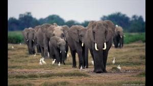 صدای فیلها در طبیعت