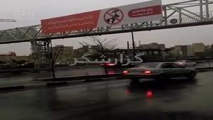 قابل توجه شهرداری تهران: حیوونا ناقل این ویروس نیستن