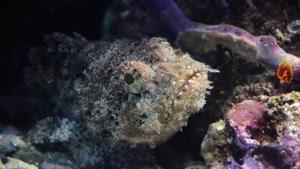 تصاویری از ماهی های زیبا در اقیانوس