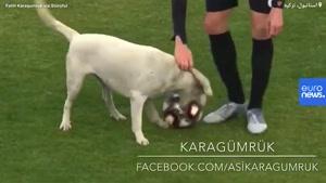 سگ بازیگوش وسط زمین فوتبال