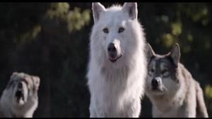 آوای وحش - The Call of the Wild 2020