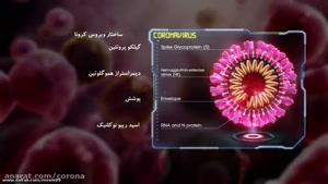 سایت دالفک - ویروس کرونا چگونه به بدن انسان حمله میکند؟