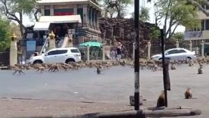 حمله میمون های گرسنه در تایلند
