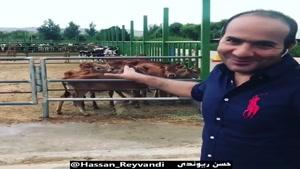 ویدیو خنده دار شاخ بازی در گاوداری حسن ریوندی