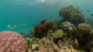 حیات وحش زیبا و شگفت انگیز  اقیانوس
