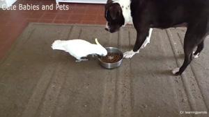 لحظات خنده دار از بازی با سگ ها در یک نگاه