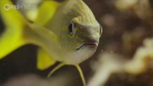 تصاویر دیدنی و شگفت انگیز از موجودات زیر آب در کوبا