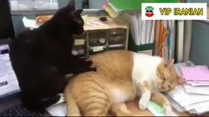 گربه های بامزه و شیطون