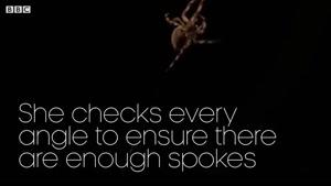 تصاویر زیبایی از تار تنیدن عنکبوت ها
