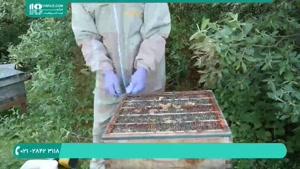 آموزش سیر تا پیاز نکات مهم درباره ی زنبورداری