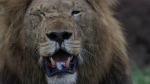 تصاویری فوق العاده زیبا و دیدنی از حیات وحش (4K)
