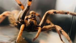 عنکبوتی با قدرت ماورایی!