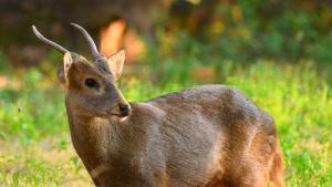 کلیپ دیدنی حیات وحش حیوانات با کیفیت فوق العاده