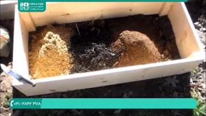 آموزش کشت و پرورش قارچ مورل
