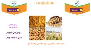 سم لیبراتور | liberator با اثر تضمینی بر علف مزارع گندم و جو