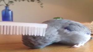 اینستا دانلودر هوشمند پرندگان