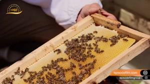 عسل آبشن 15 دقیقه ای