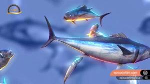 تن ماهی کیملی