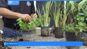 چه گیاهانی برای احداث حوضچه مناسب است ؟
