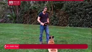 10 اصل مهم در مورد تربیت سگ خانگی