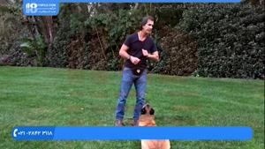 اهمیت تشویق و تنبیه در تربیت و آموزش سگ