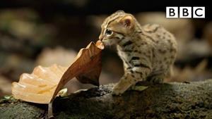 مستند کوچکترین گربه جهان
