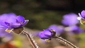 رقص گل ها تقدیم حضورتان 🌺🍃