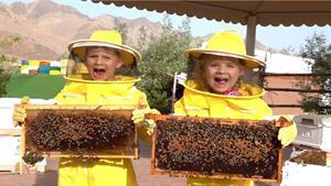 ماجراهای دیانا و روما این داستان آشنایی با طرز تهیه عسل