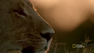 مستند پادشاهی شیرها