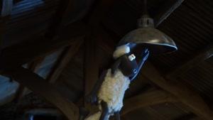 کارتون بره ناقلا / عوض کردن لامپ