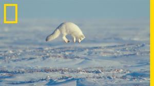 مستند قهرمانان قطب شمال