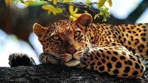 مستند زیبای حیوانات حیات وحش