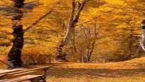 کلیپ پاییز داره میاد / کلیپ ویژه فصل پاییز
