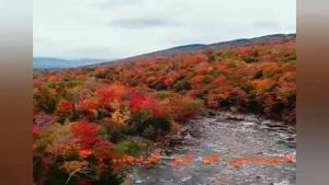 کلیپ پاییز داره میاد حواست هست / فصل پاییز