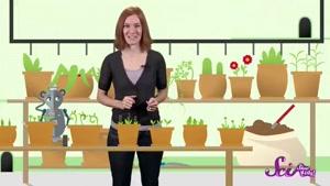 چگونه دانه به گیاه تبدیل می شود؟